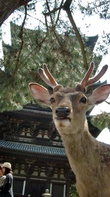 narashika.png